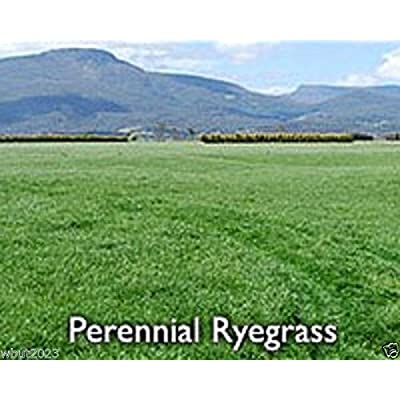 Foragemax 5 lbs, Perennial RyeGrass-l, PURE SEEDS, Cover Crop-Grazing Use:Beef, Dairy, Sheep, : Garden & Outdoor