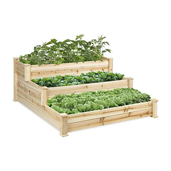 Best Choice Products 3-Tier 4x4ft Elevated Wooden Vegetable Garden Bed Planter Kit w/ No Assembly Required for Outdoor Gardening - Natural 1 STAIR STEP DESIGN: 4x4ft garden bed is designed with 3 open tiers, making it perfect for growing plants and vegetables ranging from short to medium and tall heights QUALITY PLANT GROWTH: Separated design gives your plants ample space between each other to grow to their full potential DURABLE COMPOSITION: Made of 100% fir wood that is 0.5 inches thick for a gardening planter that is built to last through the seasons