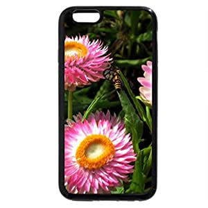 iPhone 6S / iPhone 6 Case (Black) Helichrysum bracteatum