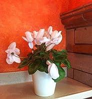 Maceta de autorriego Hidro+z en cerámica ecológica de 15 cm - Maceta inteligente para todo tipo de plantas - M