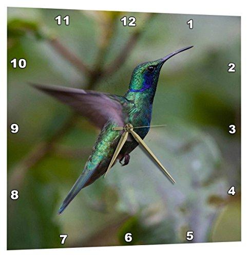 3dRose DPP_206797_1 Green Violet-Ear Hummingbird Monteverde Costa Rica Central America Wall Clock, 10