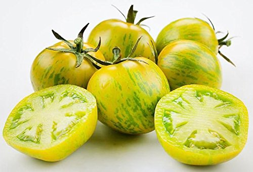 30+ ORGANICALLY GROWN Green Zebra Tomato Seeds, Heirloom NON-GMO, Indeterminate, Open-Pollinated, Super Productive, Delicious and Sweet, From USA