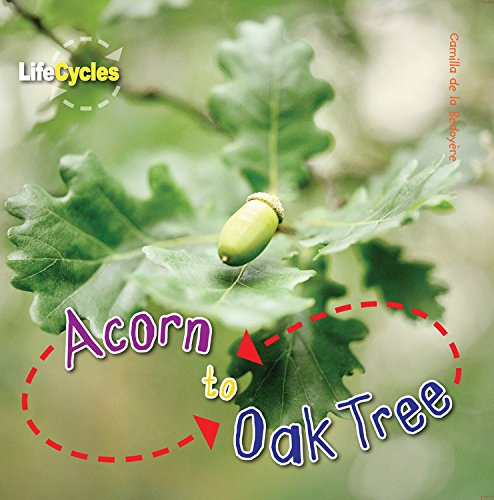 Acorn to Oak Tree (LifeCycles)