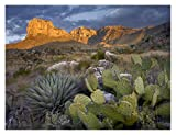 "Global Gallery ""Tim Fitzharris Opuntia Cactus & Agave Guadalupe Mountains National Park Chihuahuan Desert Texas"" Unframed Giclee on Paper Print Wall Art, 24"" X 32"""