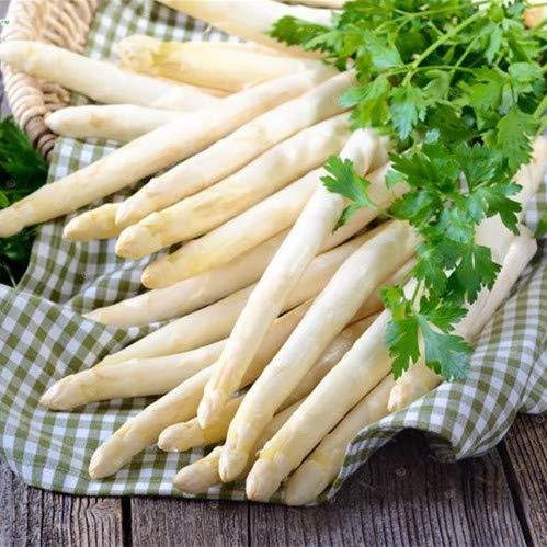 Seed 100 Mary Washington Asparagus Bonsai Healthiest Vegetable Delicious Nutritious Perennial Plant 100% Real