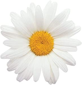 """Paper House Productions 3.5"""" Die-Cut Flower Power Daisy Shaped Magnet for Cars, Refrigerators and Lockers"""