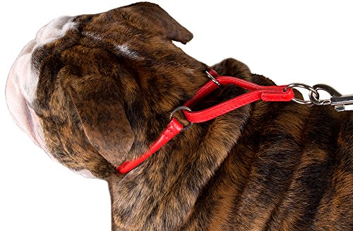 Pictures of CollarDirect Rolled Martingale Dog Collar Training Genuine 1