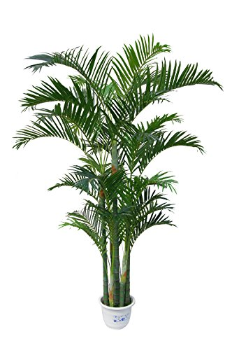 AMERIQUE AM22186PB6FT Unique and Gorgeous Tropical Palm Green Tree Artificial Silk Plant, 6', Emerald Green