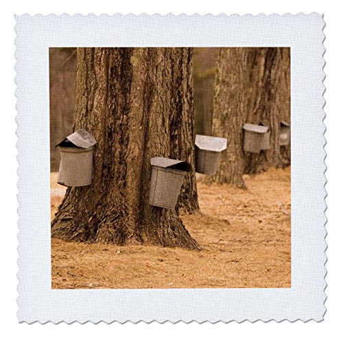 Spring Maple Trees - 7