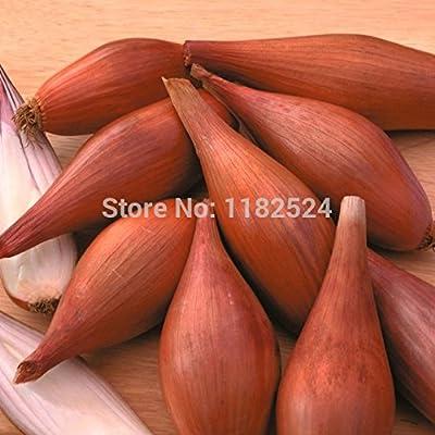 "Hot Sale!!! 500 SEEDS - "" Shallot 'Figaro "" Onion Seeds Organic vegetables seeds"