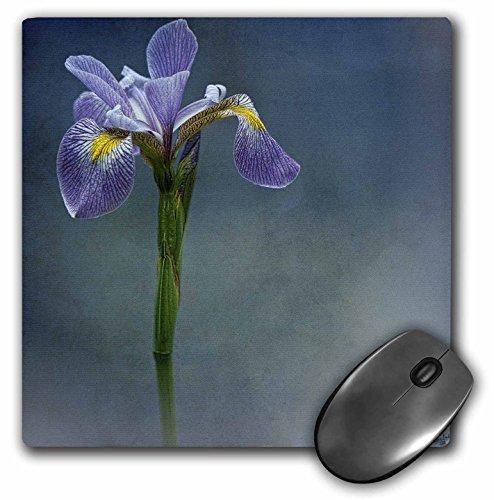 Iris Mist (3dRose LLC 8 x 8 x 0.25 Inches Iris Mist Blue Floral Flower Mouse Pad (mp_55962_1))