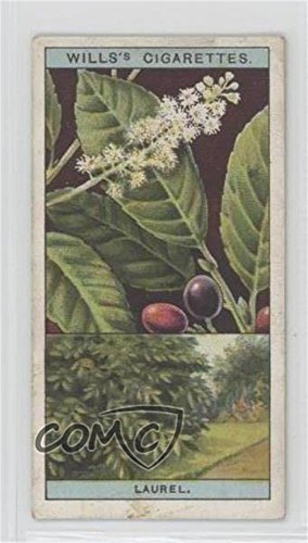 common-or-cherry-laurel-comc-reviewed-good-to-vg-ex-trading-card-1924-wills-flowering-trees-shrubs-t