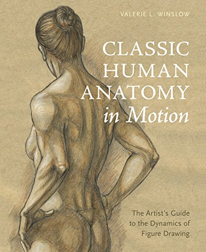 anatomy of figure drawing - 7