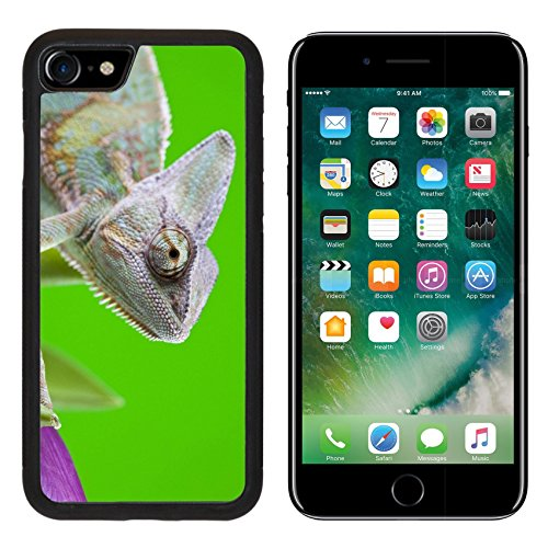 MSD iPhone 7 Case and iPhone 8 Case Protective Silicone Bumper Shockproof Anti-Scratch Resistant Hard Cover IMAGE ID: 6606337 Beautiful big chameleon sitting on a tulip Chameleon Cell Phone Cover Case