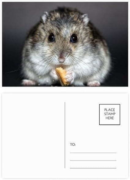 DIYthinker Rata del animal doméstico hámster lindo animal ...