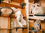 CatKick Future of Cat's Playground & Innovative Cat Tower