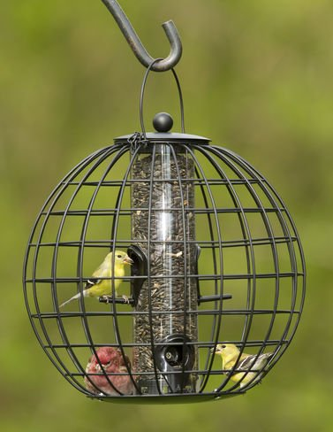 Squirrel Resistant Globe Cage Mixed Seed Bird Feeder