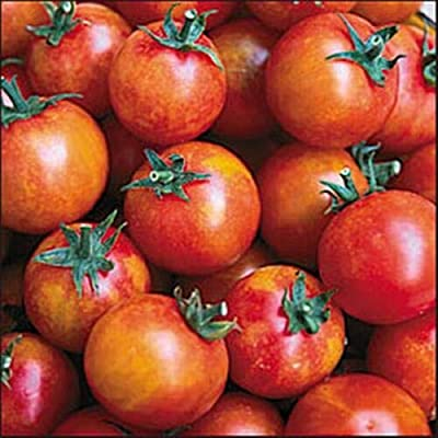 Isis Seed Cherry Candy Tomato : Garden & Outdoor