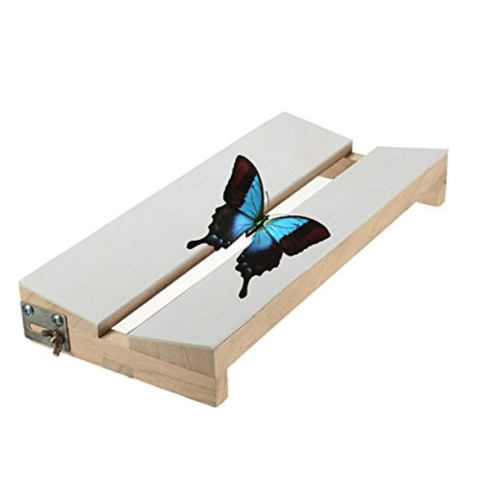 Adjustable V Shape Insects Butterfly Spreading Mounting Board Solid Wood Wings by Hi5Ashley