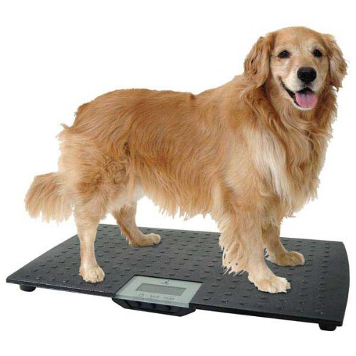 W.C Redmon Precision Digital Pet Scales, Large