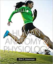 Buy It Now +$ shipping. Human Anatomy & Physiology: Mastering A&P Student Access Code Card with E-text See more like this. Practice Anatomy Lab (for Packages Without Mastering A&p Access Code): Used See more like this. Mastering A&P Access Code by Marieb Elaine N.