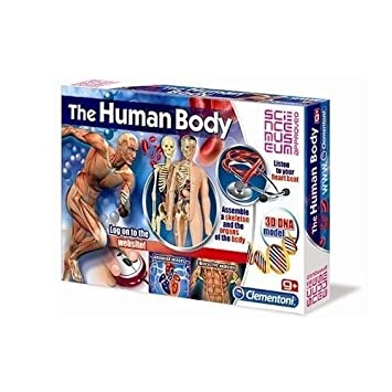 Educational Games Creative Toys Human Body Kids 61172 Amazon