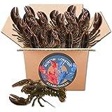 Live Boston Lobster 2-3lb Each