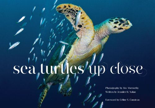 Sea Turtles Up Close