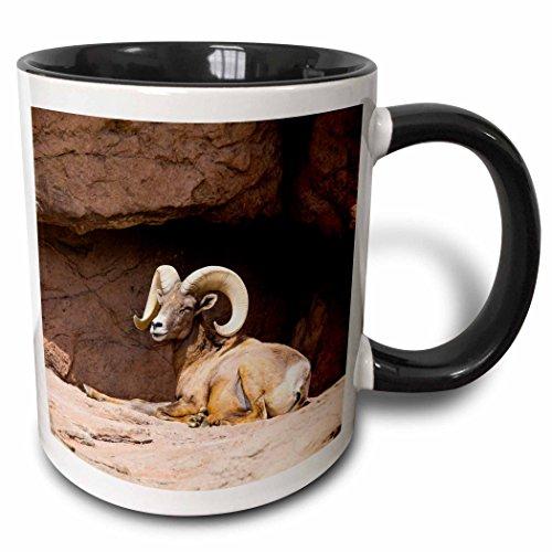 - 3dRose 190537_4, Tucson, Arizona-Sonora Museum, Desert Bighorn Sheep. Ceramic Mug 11 oz Black/White