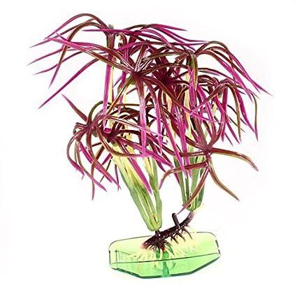 Amazon.com : eDealMax Planta de agua plástico Base Pecera, DE 5, 5 pulgadas, Verde/Fucsia : Pet Supplies