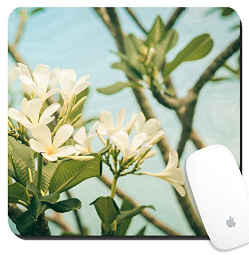 - Luxlady Suqare Mousepad 8x8 Inch Mouse Pads/Mat design IMAGE ID 31094769 Frangipani or Pagoda tree or Temple tree flower in the garden or nature vintage
