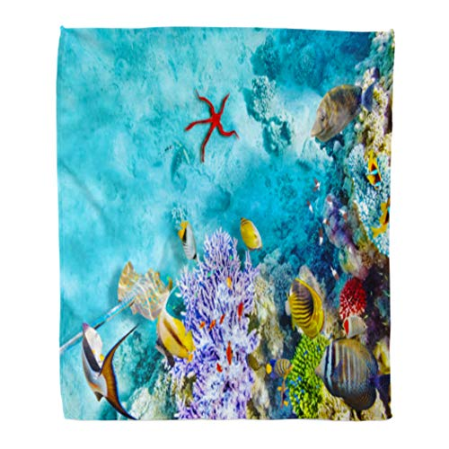 Golee Throw Blanket Red Caribbean Wonderful and Beautiful Underwater World Corals Tropical Fish 50x60 Inches Warm Fuzzy Soft Blanket for Bed Sofa