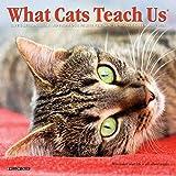 What Cats Teach Us 2021 Mini Wall Calendar