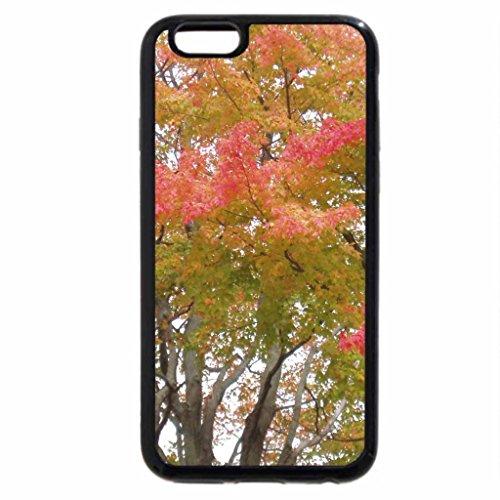 iPhone 6S / iPhone 6 Case (Black) Autumn Glory