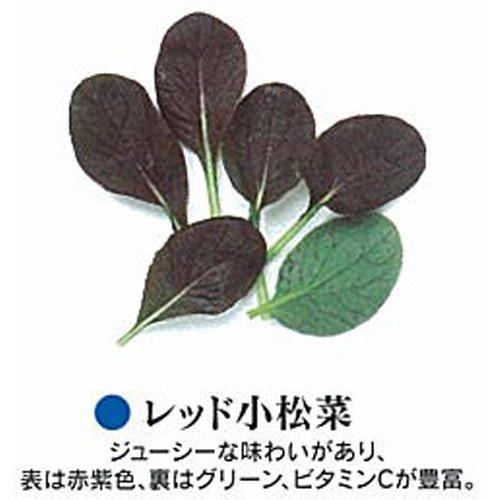 ベビーリーフ 種 レッド小松菜 1L B00NHD4IYG