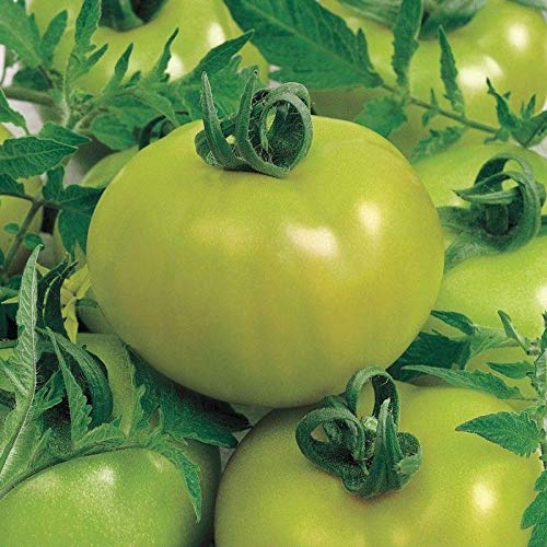Lime Tomatoes - Fried Green Tomato Hybrid Tomato Seeds (20 Seed Pack)