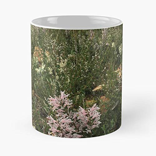 Bush Nature Wildflowers Grevillea - Funny Gifts For Men And Women Gift Coffee Mug Tea Cup White-11 Oz.