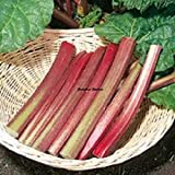 Organic Heritage Sydney Crimson Rhubarb Non-GMO 15+Extra Seeds Excellent for pies,tarts,jams or eat it just raw. Grows Very Well Over a Range of climates. Sold and Shipped Within Canada