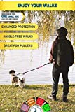 Pet Dreamland Running Dog Leash for Small Dogs