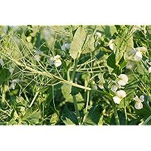 Field Pea (1 LB)