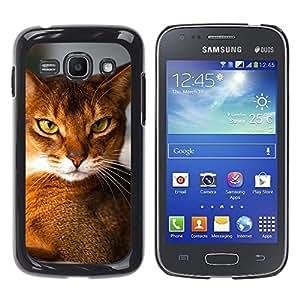 YiPhone /// Prima de resorte delgada de la cubierta del caso de Shell Armor - Abyssinian Chausie Orange Cat Breed - Samsung Galaxy Ace 3 GT-S7270 GT-S7275 GT-S7272