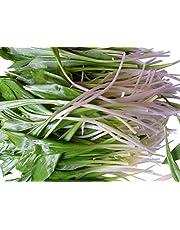 50 Semillas-Allium ursinum- (Bärlauch) by Samenchilishop