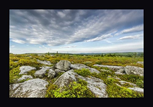 WV, Landscape in Dolly Sods Wilderness Area by Jay O'Brien - 21