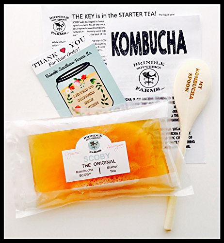"""Large 4"""" SCOBY + 1.5 cups real starter kombucha + detailed INSTRUCTIONS! Make unlimited kombucha at home."""