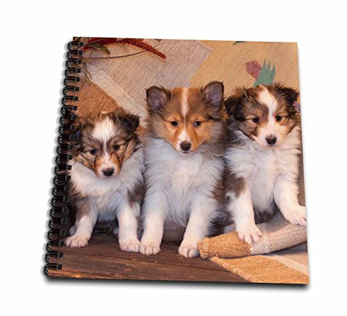 3dRose Three Shetland Sheepdog Puppies Sitting on a Buckboard, Mr, Drawing Book, 8 by 8