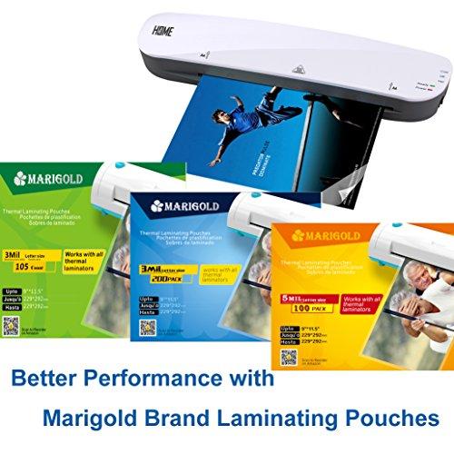 Large Product Image of Marigold 9