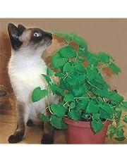 Semente de Erva dos Gatos - Embalagem 150mg