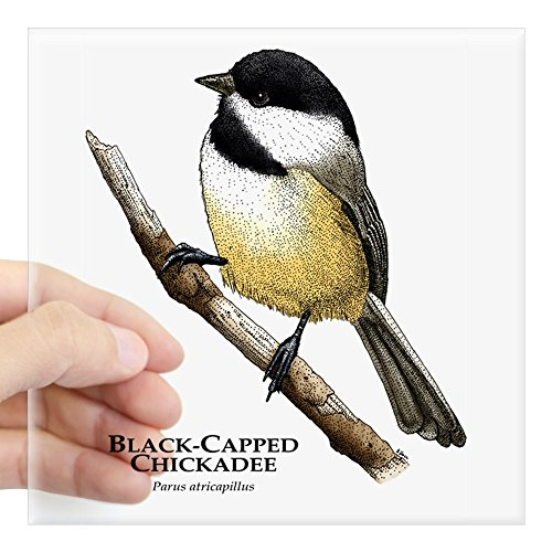 CafePress Black_Capped_Chickadee Square Bumper Sticker Car Decal, 3