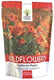 California Orange Poppy Wildflower Seeds - Bulk 1/2 Pound Bag - Over 150,000 Native Seeds - California State Flower!