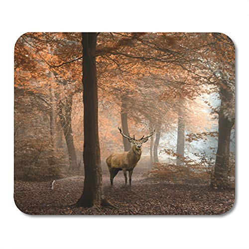 "Semtomn Rectangle Mouse Pad Rubber Mini 9.5"" x 7.9"" Stunning of Red Deer Stag in Foggy Autumn Colorful Forest Landscape Mousepad Smooth Gaming Notebook Computer Accessories Backing"